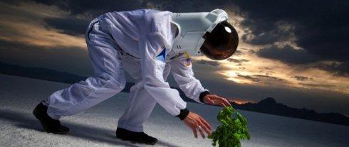 Элон Маск ищет фермера, не страдающего клаустрофобией
