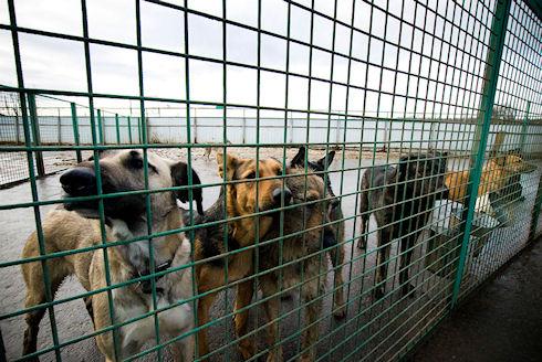 Европейский опыт в решении проблемы бездомных животных