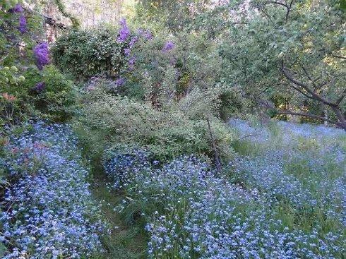 Голубой сад. Преимущества голубого цвета
