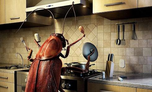 Как быстрее всего можно избавиться от тараканов