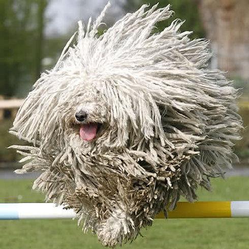 Какие породы собак сегодня в моде?
