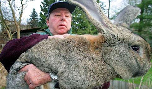 Что делать если крольчиха поедает новорожденных крольчат?