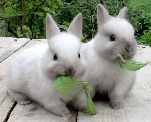 Кролики и неприятности с ними связанные