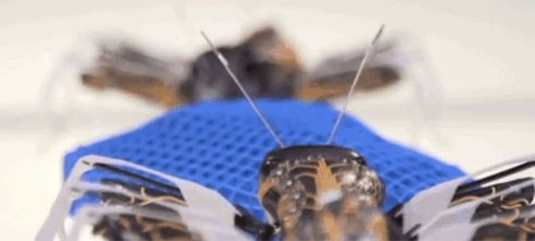 На 3D-принтере напечатали муравьев (Видео)