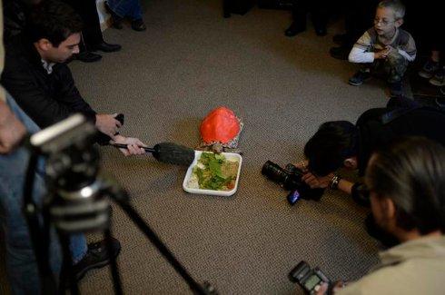 На черепаху одели панцирь, напечатанный на 3D-принтере