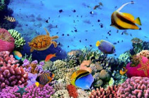 Невероятно красивый подводный мир Египта