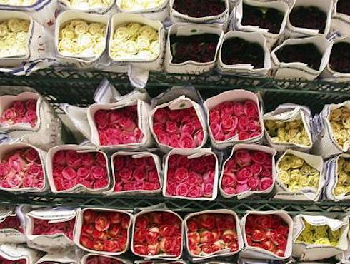 Открытие дела по продаже цветочных семян