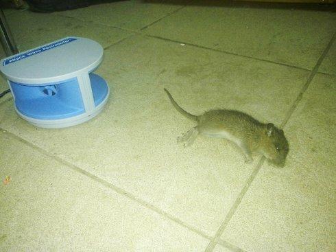 Отпугиватель крыс – последнее слово в электронике