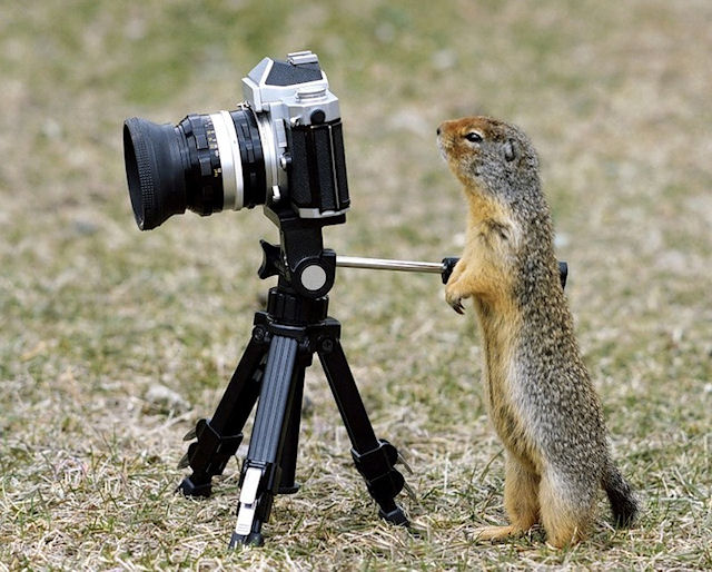Почему фотографам нужен штатив?