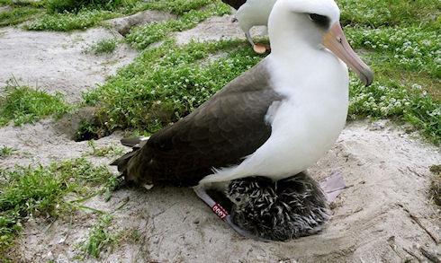 Чужая помощь помогает птицам проще относиться к своему потомству