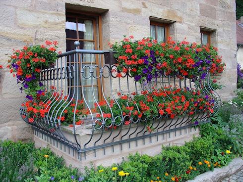 Размещение комнатных цветов на балконе в городе