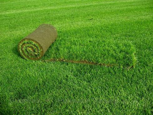 Рулонный газон - оптимальное решение