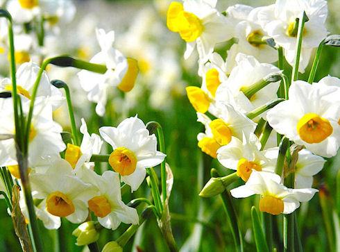 Самовлюбленные цветы