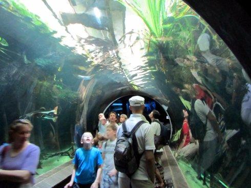 Шенбруннский зоопарк в Вене