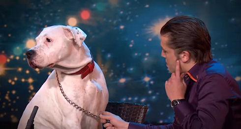 Собака покорила зрителей исполнением песни Уитни Хьюстон