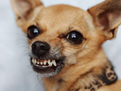 Собаки способны распознавать честных и лживых людей, - ученые