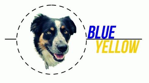 Собаки способны распознавать синий и жёлтый цвета