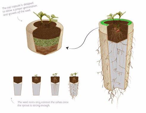 Создана биоурна, которая превратит умершего человека в дерево