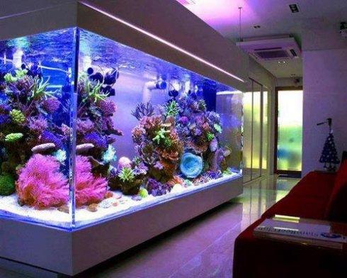 Тонкости содержания аквариума дома