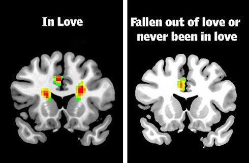 Ученые показали как выглядит мозг влюблённого человека