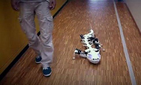 Ученые создали роботизированную саламандру (Видео)