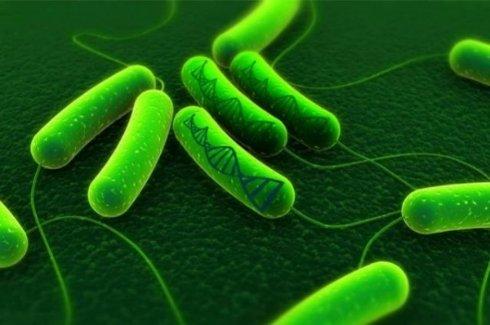 Американские ученые «взломали» живые клетки