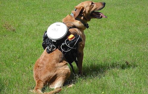 Гаджет для управления собаками
