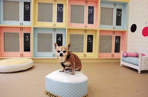 В гостиницу с животными: о чем нужно знать