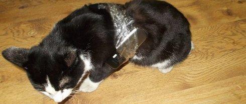 В Коми задержали кошку, пытавшуюся пронести в тюрьму мобильные телефоны