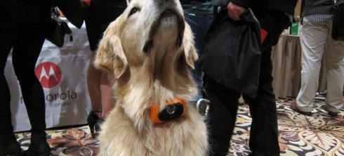 В США разработали собачий смартфон-ошейник