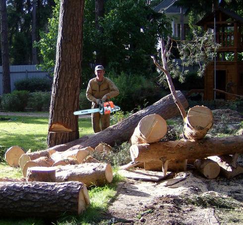 Валка леса и вырубка кустарника