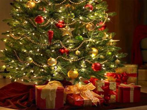 Как правильно выбрать елку к Новому году