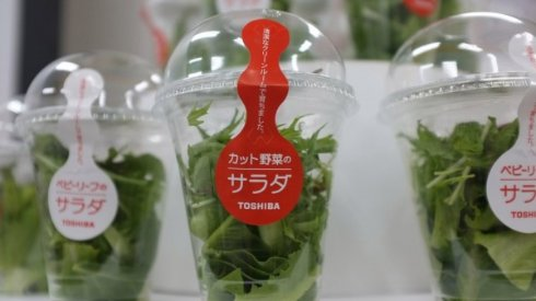 Toshiba займётся выращиванием чистых овощей