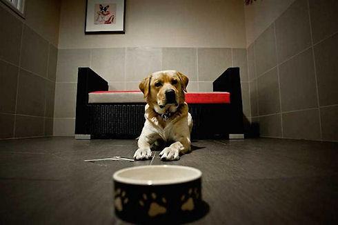В Испании 40% сельских отелей дружелюбно настроены к постояльцам с животными